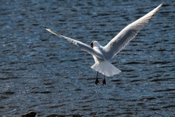 Seagull fly water spring nature lake birds sunny day light