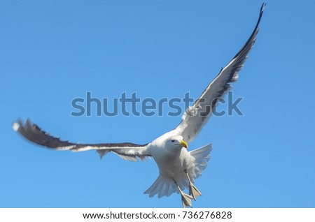 seagull flying #736276828