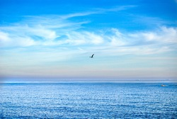 seagull flying above the ocean sea