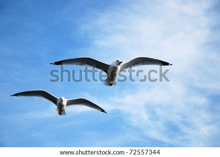 Seagull flying against a blue sky