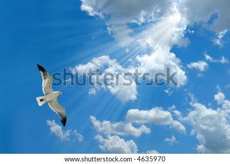 Seagull flying and sunlight