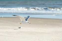 seagull flying at the beach