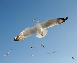 seagull flying on blue sky