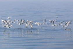 seagull flying over surface ocean