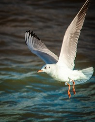 Seagull flying over the sea in the blue sky 2020