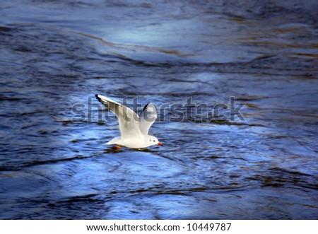 seagull flying over the sea near the coast
