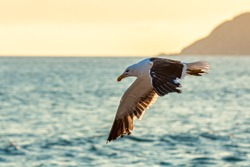 seagull flying over the sea with mountain in the background