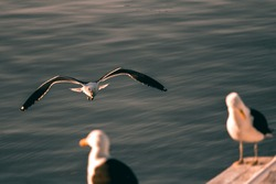 Seagull flying, reaching the boat to rest in the sun. Looking at the group of seagulls