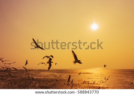 Seagull flying with sunset on the sea at Bangpu, Thailand #588843770