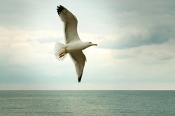 Seagull front of the sky