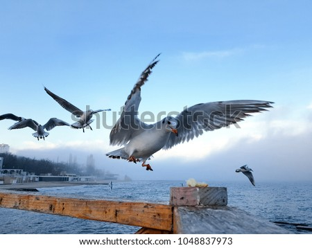 Seagull grabs a piece of bread on the railing, flock of seagulls on the seashore, close photo of the seagull, seagull in flight