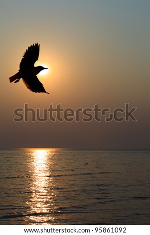 Seagull hover between sunset
