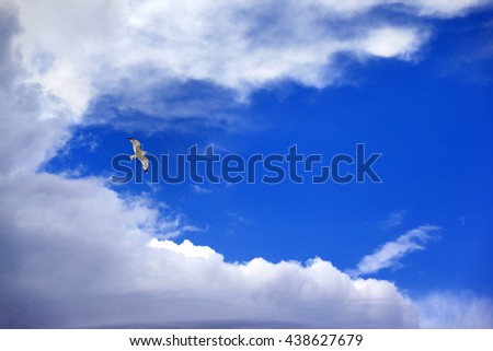 Seagull hover in blue sky with clouds #438627679
