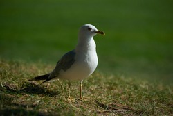 Seagull in close up on quayside
