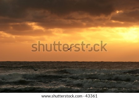 Seagull in sunset - bird is in focus