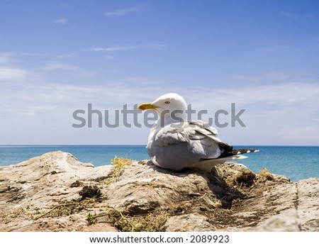 Seagull in the beach in Turkey - stock photo