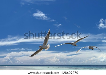 Seagull in the blue sky background tropical island paradise