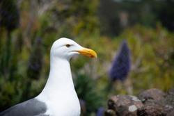seagull in the goldengate bridge