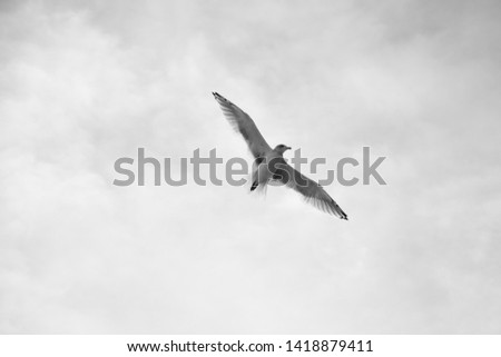 seagull in the sky (BW)