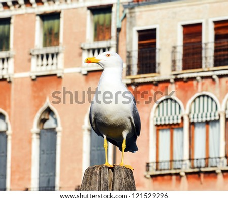 Seagull in Venice Italy