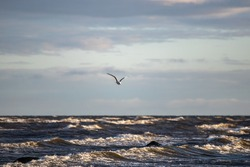 Seagull (Larus argentatus) flying over the sea against a background of blue sky . Beautiful seascape view.