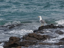 seagull looking out to sea