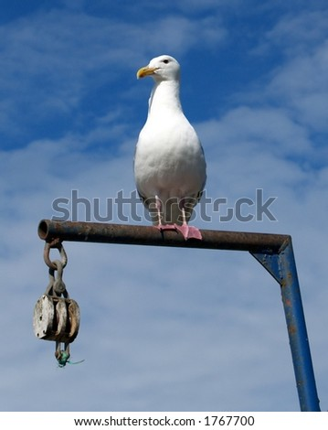 Seagull on a Fish Scale, Homer, AK