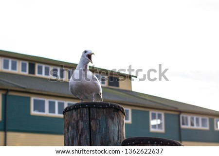 Seagull on a Pier #1362622637