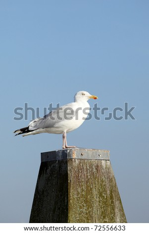 Seagull on a pole in the harbor