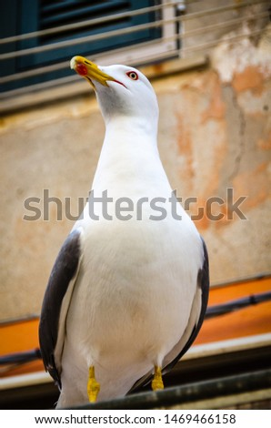 Seagull on an awning in Italy