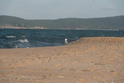 seagull on Black Sea coast