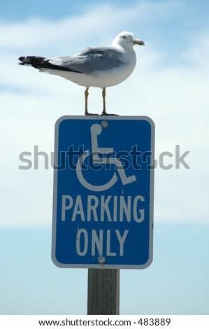 Seagull on Handicapped Parking sign, Baylands Nature Preserve, Palo Alto, California