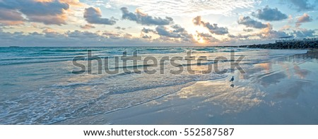 Seagull on Miami South Beach Panoramic View Morning Amazing Light Reflection on Water Gentle Colorful Waves #552587587