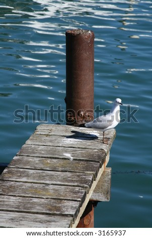 Seagull on old pier