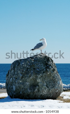 Seagull on Rock 3