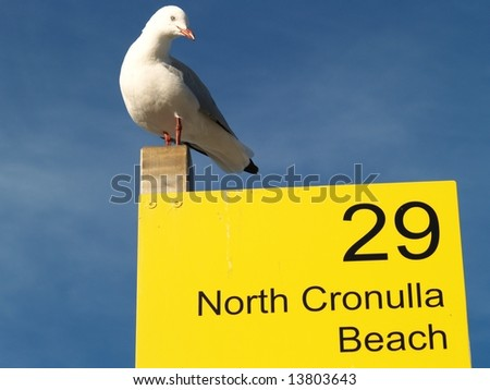 Seagull on sign pole