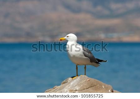 seagull on stone on sea