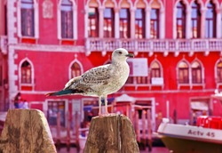 Seagull on the background of a Venetian palace. Photo in red.