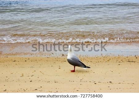 Seagull on the beach #727758400
