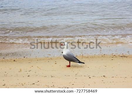 Seagull on the beach #727758469
