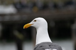 Seagull on the ground at a dock in sanfrancisco