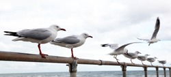 Seagull on the line