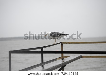 Seagull on the pier #739110145