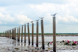 Seagull on the post at the  sea  thale noi phatthalung