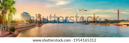 Seagull over downtown of Cairo at sunset