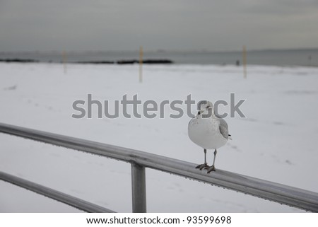 Seagull Perched on Railing on Snow-Covered Beach