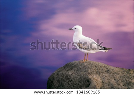 Seagull perched on rock #1341609185