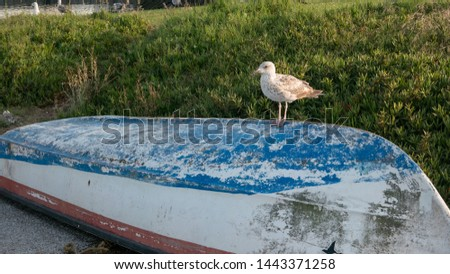 Seagull perched on upturned fishing boat