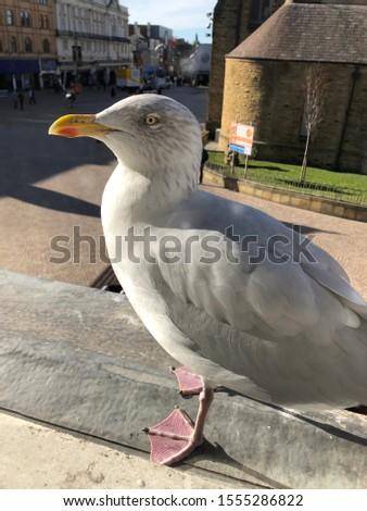 Seagull sat on a windowsill in Blackpool
