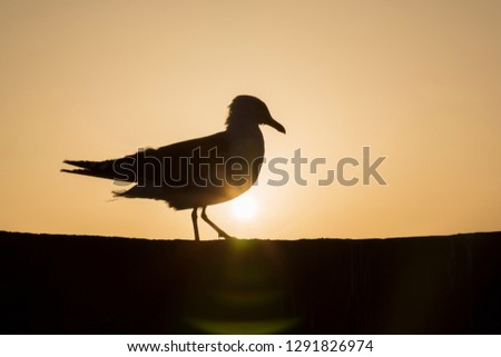 Seagull shadow, Morocco.